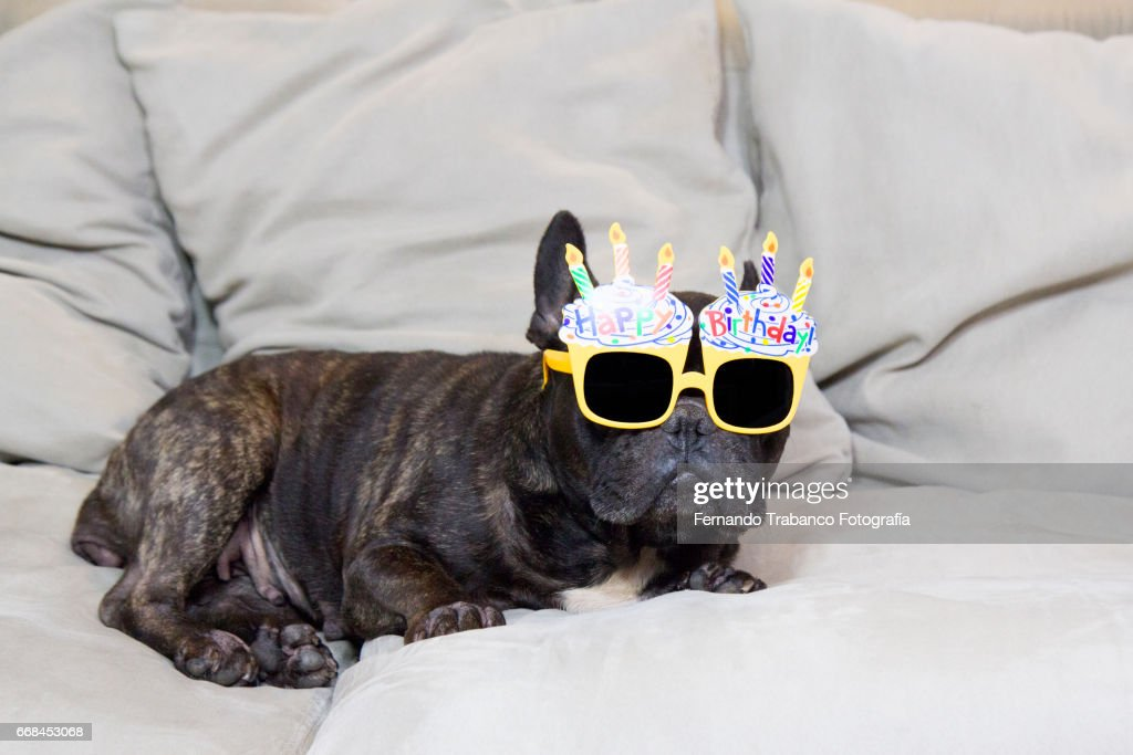 Dog Lying On Sofa With Funny Sunglasses And Happy Birthday : Stock Photo