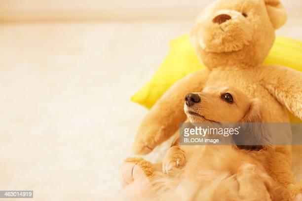Dog Lying On Stuffed Toy