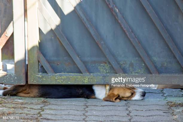 Dog lying on the street
