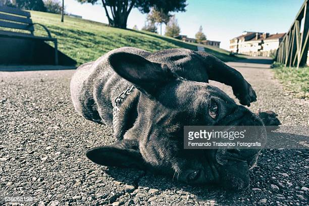 dog lying resting - dead dog stock pictures, royalty-free photos & images