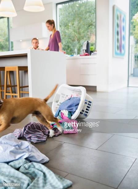 Dog making mess in kitchen