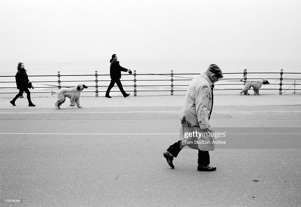 A Dog, Man's Best Friend - He is your friend, your partner, your defender, your dog. You are his life, his love, his leader. He will be yours, faithful and true, to the last beat of his heart. You owe it to him to be worthy of such devotion. Owners exercise their Afghan Hounds on the promenade at Blackpool.