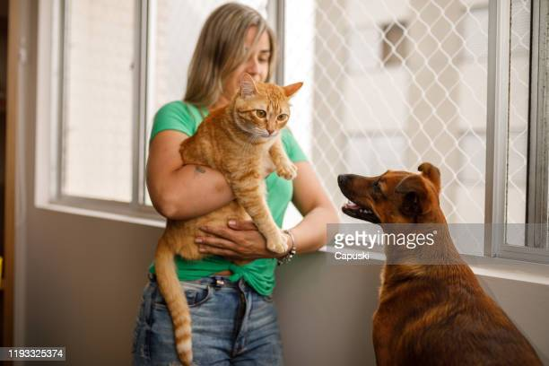 dog meeting the new cat - pet adoption stock pictures, royalty-free photos & images