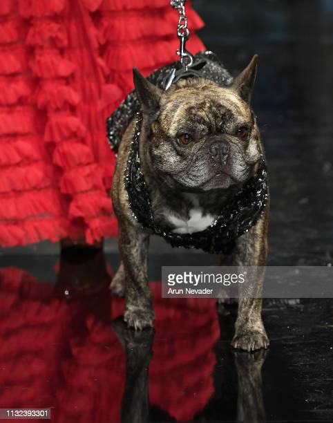 A dog model walks the runway wearing Anthony Rubio at Los Angeles Fashion Week FW/19 Powered by Art Hearts Fashion at The Majestic Downtown on March...