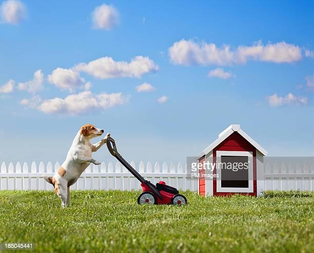 Dog mowing lawn near dog house