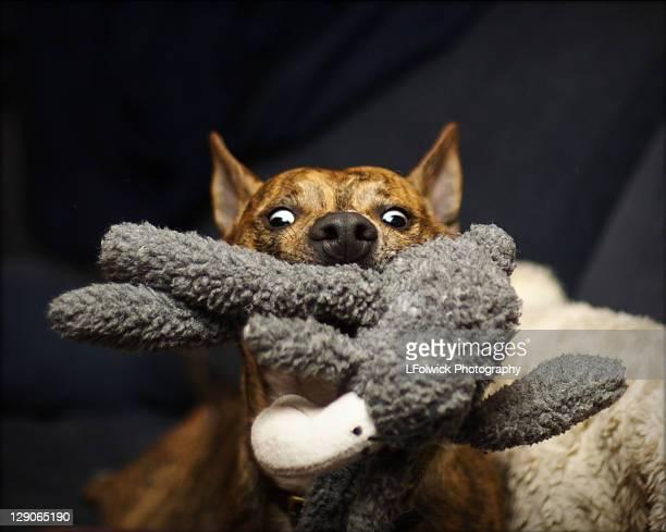 Dog mplaying