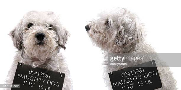 dog mug shots - disrespect stock pictures, royalty-free photos & images