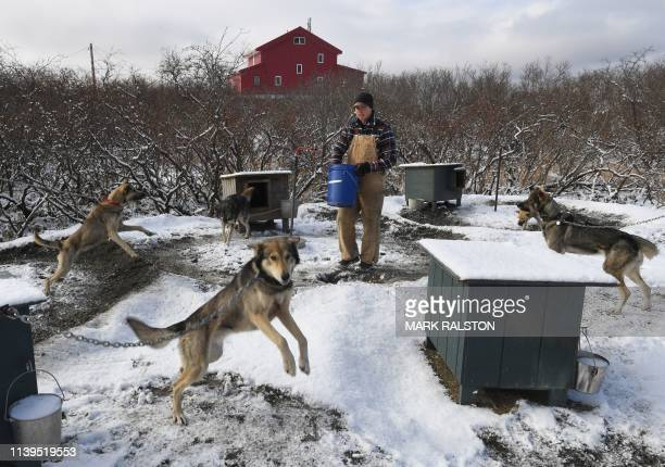 Dog musher Matt Scott who's dog sled training has been affected by melting permafrost tundra at the climate change affected Yupik Eskimo town of...