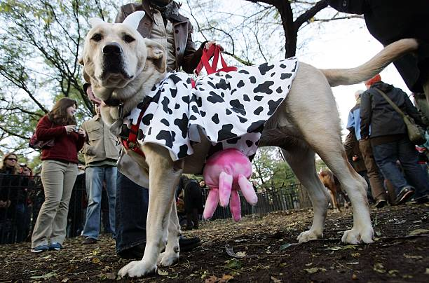 Masquerading Mutts March In Halloween Dog Parade