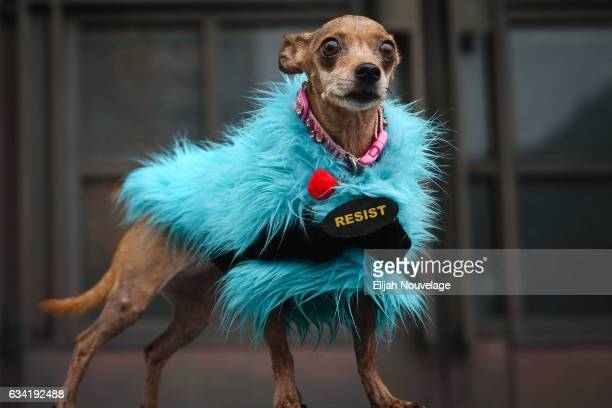 A dog named Doggie wears a sign that says Resist while her owner participates in a protest against US President Donald Trump's executive order...