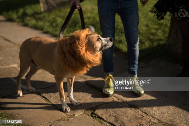 A dog named George sports a mane as he and his owners attend the biannual 'Whitby Goth Weekend' festival in Whitby northern England on October 27...