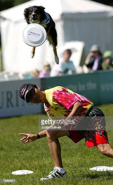 A dog named KD leaps over his owner Benny Wong during the qualifying round of the freestyle flying disc competition May 9 2003 at the Purina Dog Chow...
