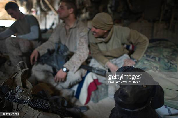 A dog named Moily looks at the camera as US Marines from 1st Battalion 8th Marines clean their weapons before a patrol outside new Mirage base on the...