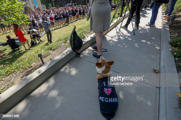 A dog named Pippin wears an honorary shirt as students at Immaculate Heart High School and Middle school participate in a program to honor alumna...