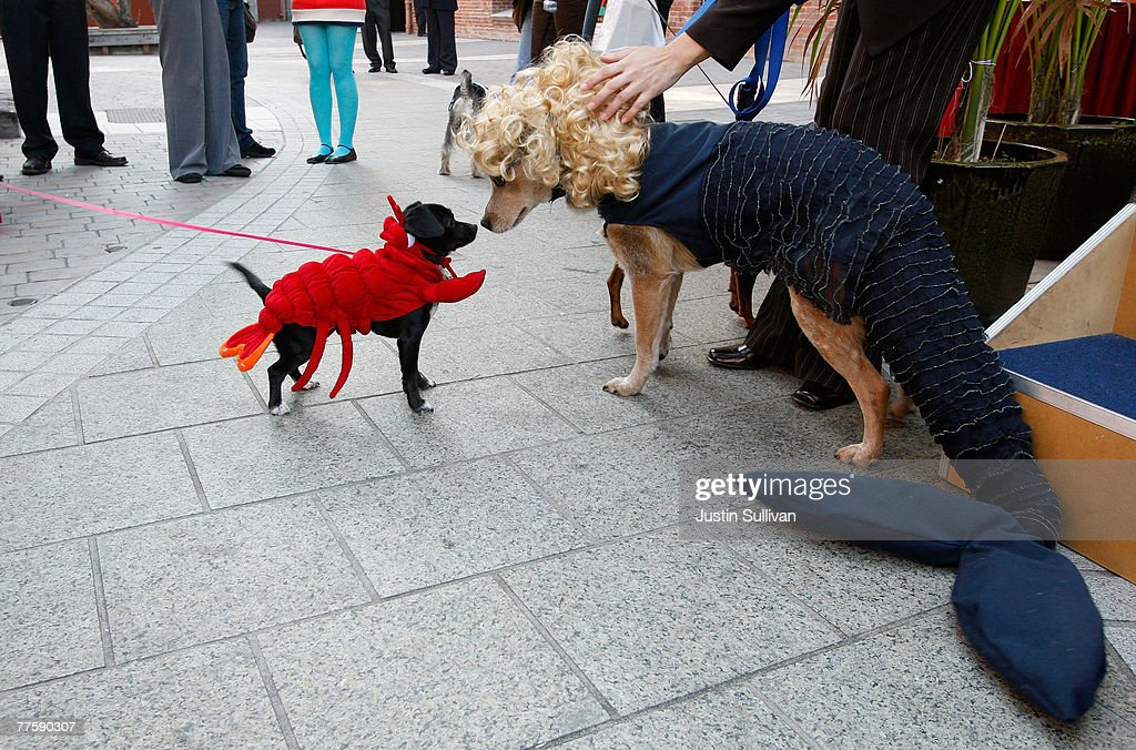 A dog named Ringo wears a mermaid costume as he greets a dog wearing a lobster & Halloween Costumes to Inspire Your Dogs Photo Album | Getty Images