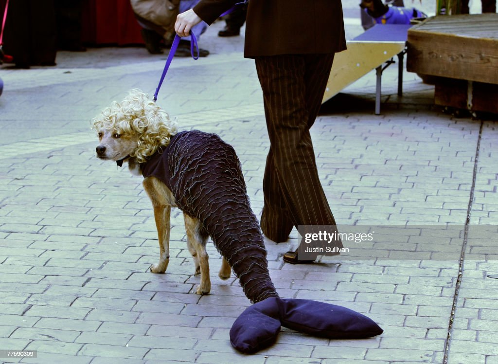 San Francisco Dogs Dress Up For Halloween : News Photo