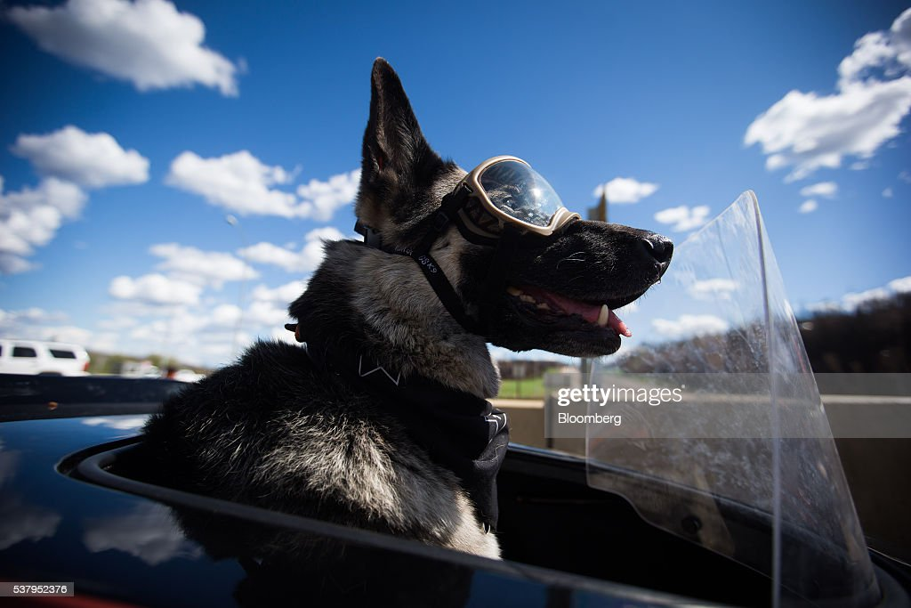 A dog named Winky sits in a trailer attached to a motorcycle owned by Sandy MacDonald, a crane operator who works in the oilsands, not pictured, in Fort McMurray, Alberta, Canada, on Friday, June 3, 2016. Residents began returning home this week and companies are resuming operations after Alberta wildfires forced the evacuation of more than 80,000 people from Fort McMurray and knocked more than 1 million barrels of production a day offline this month. Photographer: Darryl Dyck/Bloomberg via Getty Images