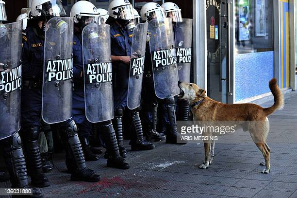 A dog nicknamed Loukanikos barks in front of Greek riot police in central Athens on December 8 2010 The dog who has been pictured in demonstrations...