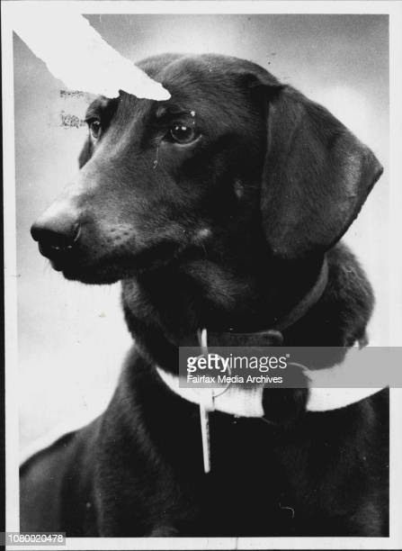 Dog of the week Boris Dach September 28 1989