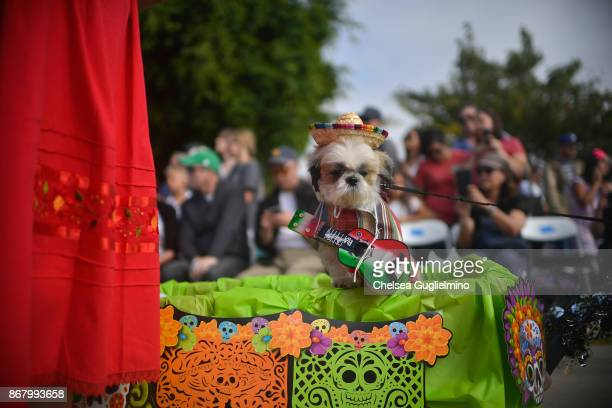 Dog Oliver is seen during the Haute Dog Howl'oween Parade on October 29 2017 in Long Beach California