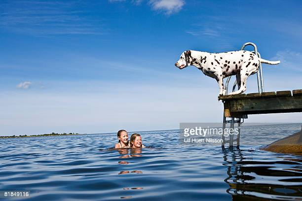Dog on a jetty and girls swimming Oland Sweden.