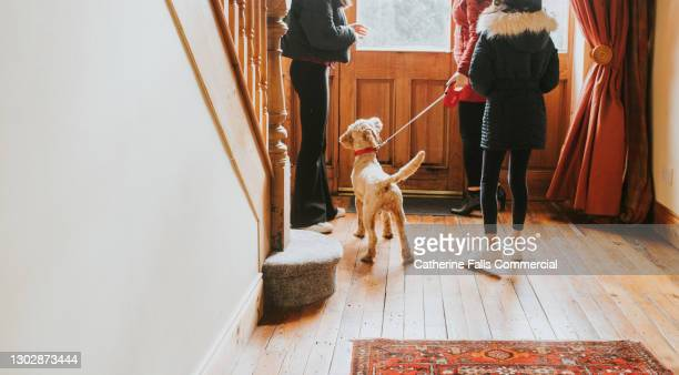 a dog on a lead is excited to leave the house with his humans - outdoor pursuit stock pictures, royalty-free photos & images