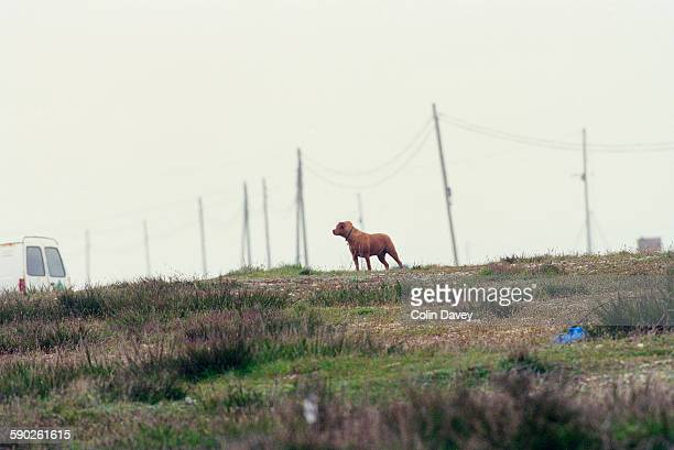 A dog on a leash with no owner in Dungeness Kent UK 24th April 1998