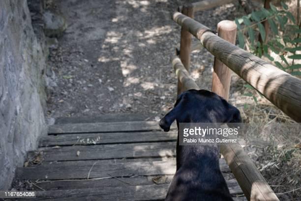 dog on a road - elevador de escada imagens e fotografias de stock