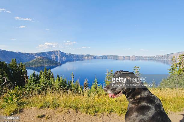 a dog on a trail with a view of crater lake and wizard island - dan sherwood photography stock pictures, royalty-free photos & images