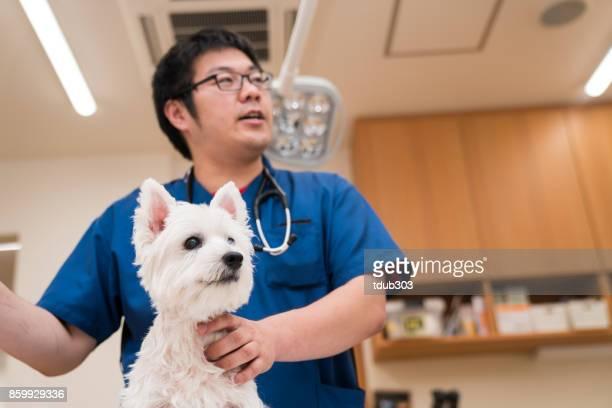 動物病院の診察台の犬 - 獣医 ストックフォトと画像