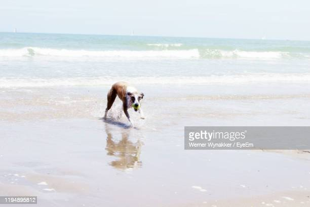 dog on beach against sky - overexposed stock pictures, royalty-free photos & images