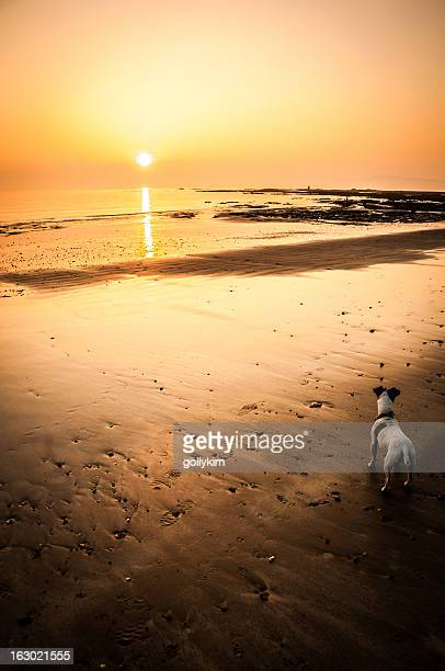Dog on beach at sunset, Isle of Wight