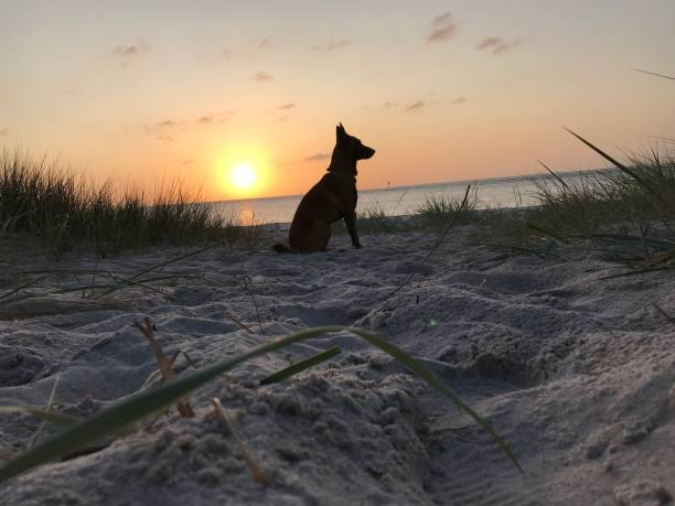 Dog On Beach During Sunset