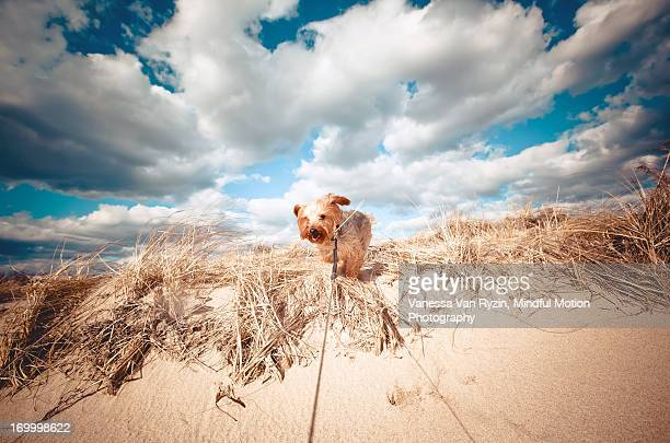 dog on beach - vanessa van ryzin stockfoto's en -beelden