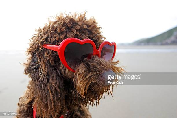 dog on beach wearing sunglasses - sunglasses stock pictures, royalty-free photos & images