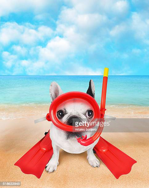 Dog on beach with snorkeling equipacion