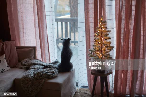 dog on bed looking out glass door - heshphoto stock pictures, royalty-free photos & images