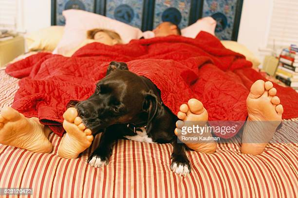 dog on bed sniffing woman's foot - feet lick stock pictures, royalty-free photos & images