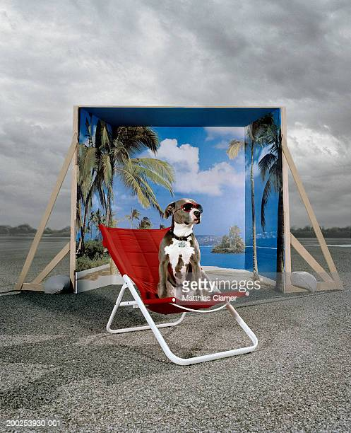 Dog on chair with glasses, backdrop in background