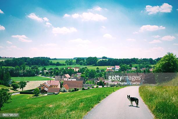 Dog On Country Road In Sunny Day