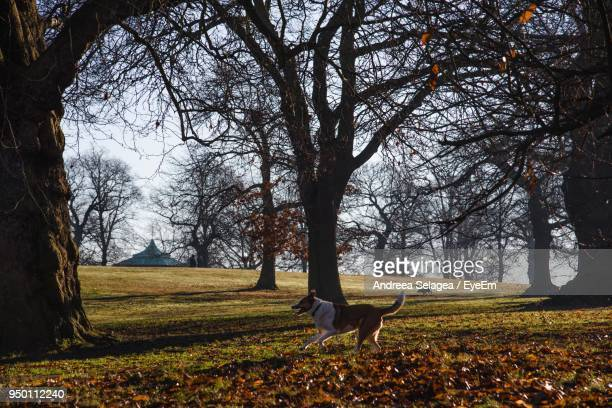 Dog On Field By Bare Trees At Public Park During Autumn
