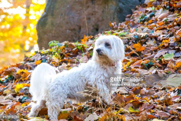 Dog On Field During Autumn