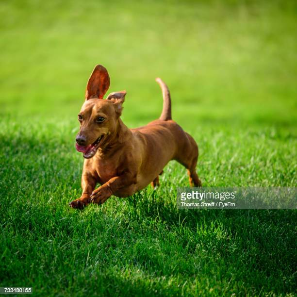 Dog On Field