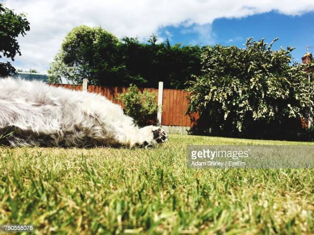 Dog On Grass Against Trees