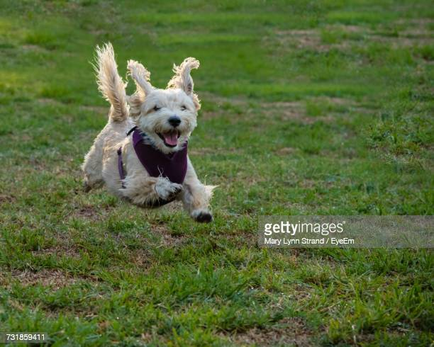 dog on grass - one animal stock pictures, royalty-free photos & images