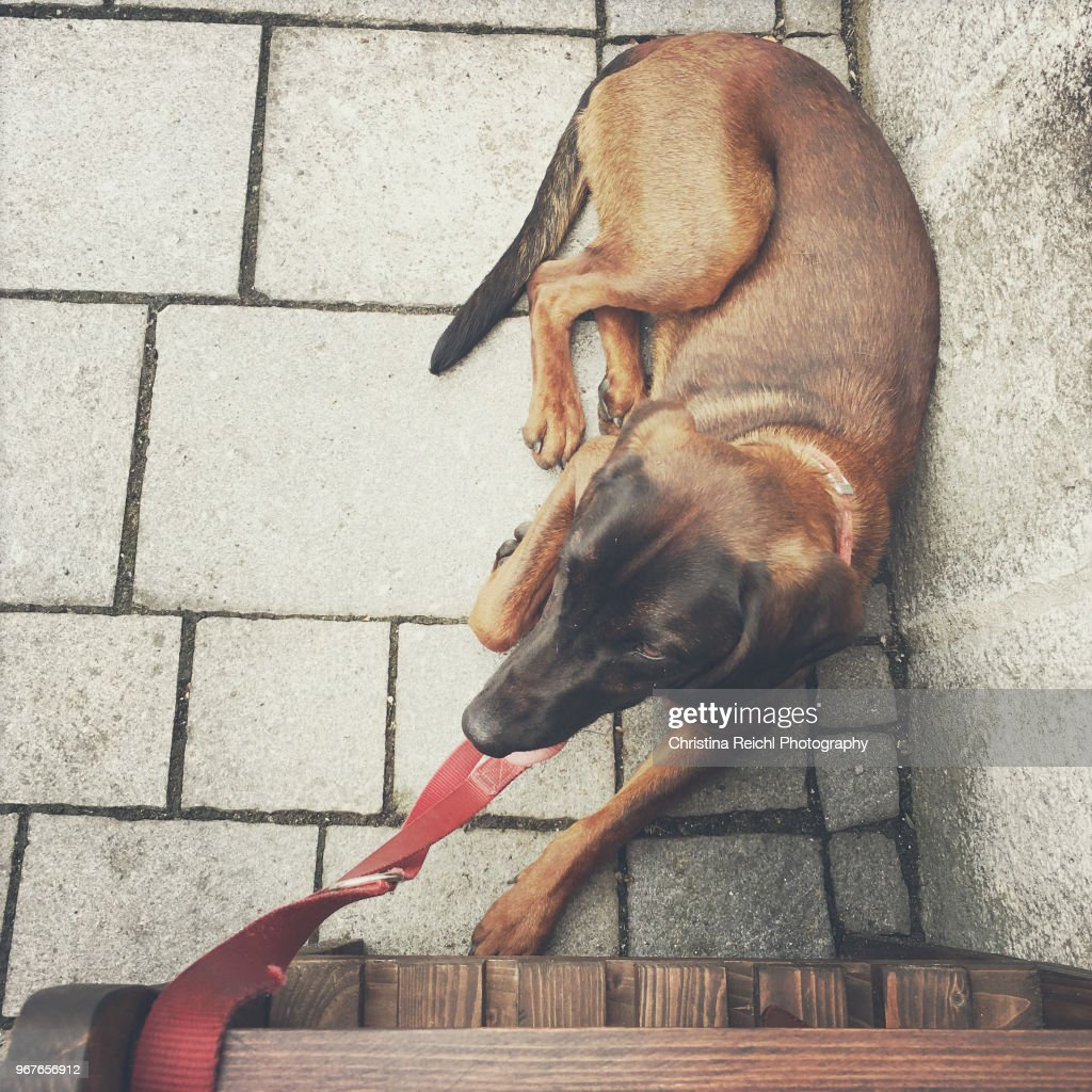 Dog on leash lying down on cobbled street next to wall next do a bench where owner sits