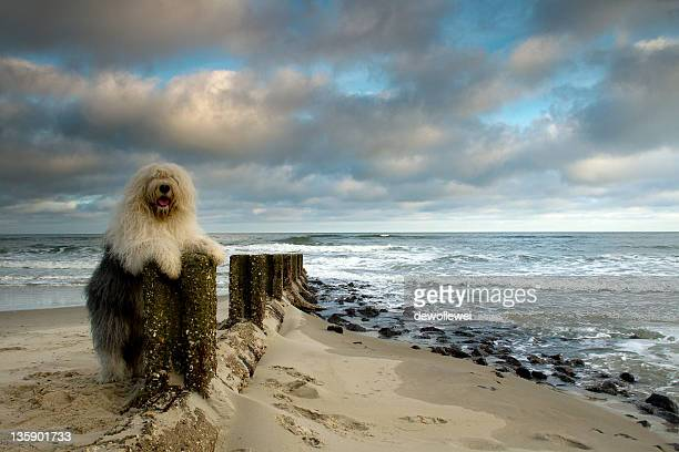 Dog on log of wood in sand
