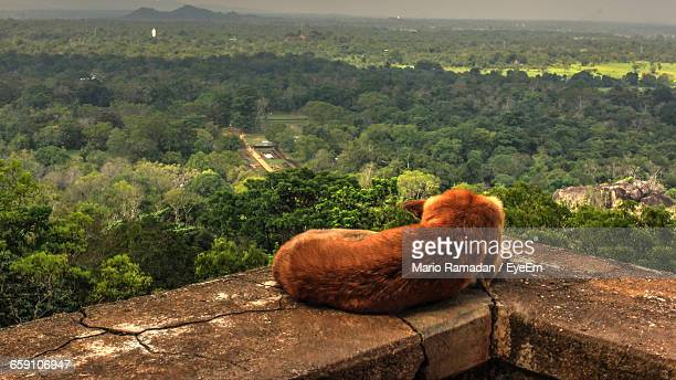 Dog On Lookout Point And Green Landscape In Background