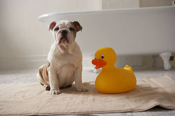 Dog On Mat With Plastic Duck Wall Art