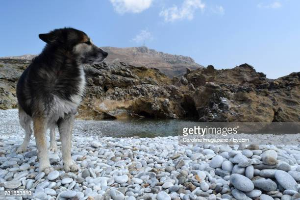 dog on pebble beach against sky - carolina fragapane stock pictures, royalty-free photos & images